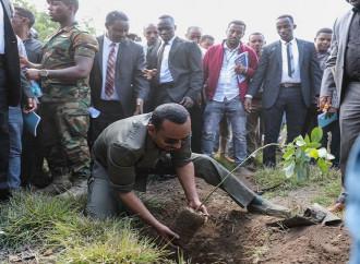 L'Etiopia ha piantato 350 milioni di alberi in un giorno?!