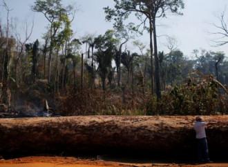 Amazzonia, voci contrastanti sulla deforestazione in atto