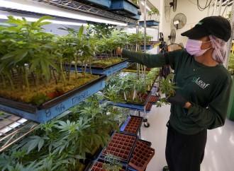 Cannabis e suicidi: lo studio che inquieta gli americani