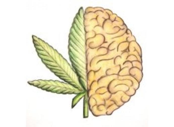 cannabis e cervello
