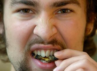 Sì ai vermi da mangiare, l'Ue accelera sull'ideologia verde