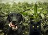Cannabis per cani e gatti, tanto per sdoganare un po'