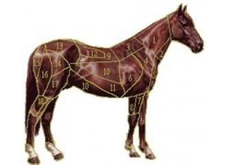 """Dalla mucca  al """"cavallo pazzo"""",  i conti non tornano"""