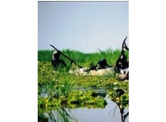 Il Lago Ciad si asciuga, anzi no