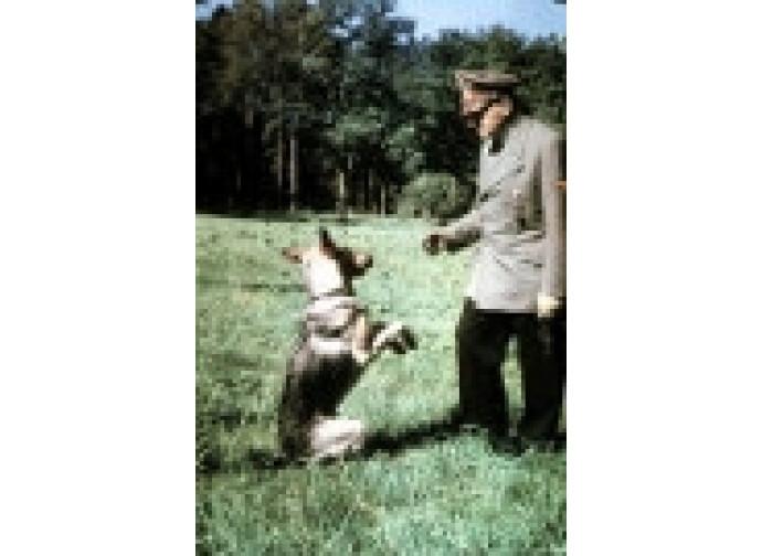 Hitler con la sua fedele cagna