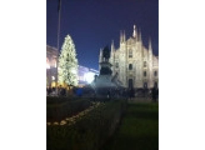 L'albero e il Duomo di Milano