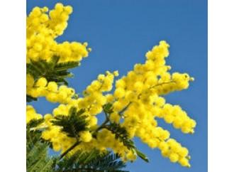 Le mimose e le fobie dell'uomo moderno