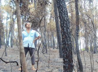 Le autorità di Hué, in Vietnam, incendiano le foreste per appropriarsi delle terre del monastero di Thien An