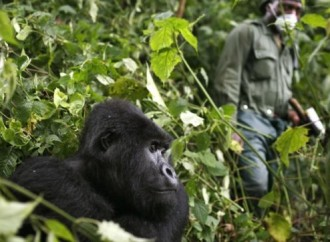 La pandemia minaccia la fauna selvatica africana