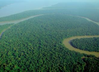 """L'Amazzonia non è il """"polmone verde"""". Né un paradiso."""