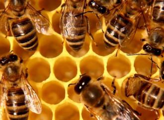 Gli apicultori sperano in Sant'Ambrogio