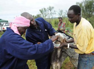 Burundi offeso da dieci asini regalati da Parigi