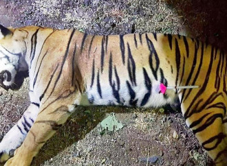 La tigre Avni e l'impossibilità di ragionare con l'ideologia