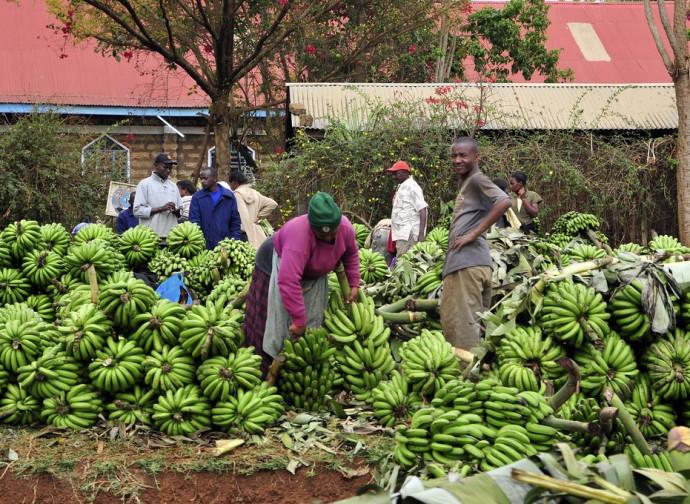 Kenya, agricoltura