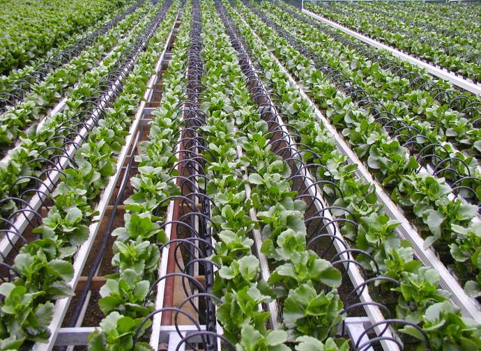 Nuove tecniche agricole