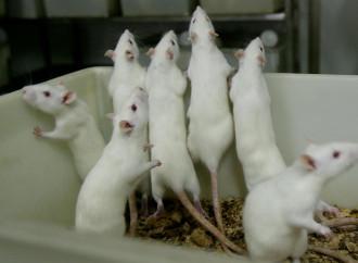 Esperimento su topi: figli biologici da coppie omosex