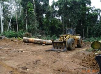 Camerun, la deforestazione all'origine di un disastro ecologico incombente