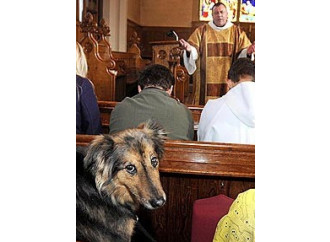 Milano, liberi cani in libere chiese