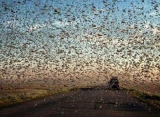 Il Corno d'Africa colpito da immensi sciami di locuste