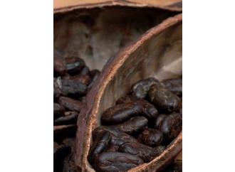 Una fabbrica di cioccolato, speranza per l'Africa