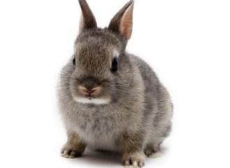 "Caro Papa, noi ""conigli"" siamo tanto felici..."
