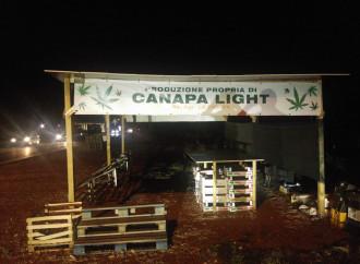 Cannabis in vendita come ciliegie: chi applica la legge?