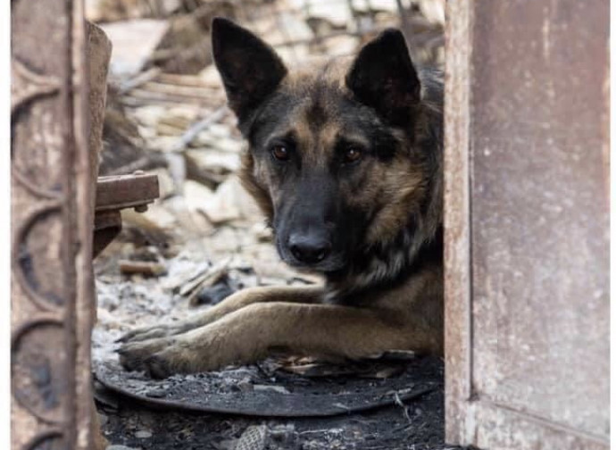 Cane sopravvissuto al bombardamento