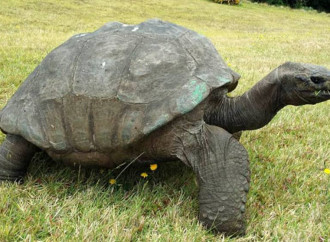 "Una tartaruga simbolo dei ""diritti"" gay"