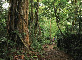 Quel delitto tribale che svela l'inferno tropicale