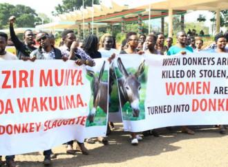 In Africa stanno scomparendo gli asini