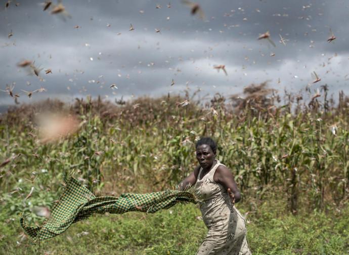 Le locuste invadono l'Africa