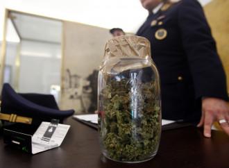 Cannabis sequestrata, il corto circuito del Governo