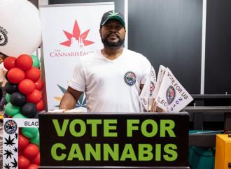 Cannabis innocua, la bugia di Grillo per un pugno di Pil