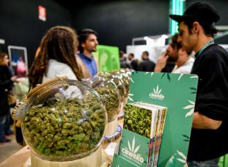 """""""Così ho mostrato a Salvini che la cannabis light fa male"""""""