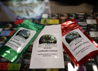 Cannabis, niente scuse: ora chiudete i negozi