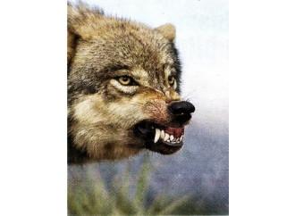 Attenti al lupo. E soprattutto alle sue lobby