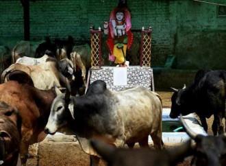Un cristiano è stato ucciso in India con l'accusa di aver macellato un bue sacro