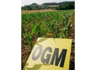 """Non condannare gli Ogm se vogliamo """"nutrire il pianeta"""""""
