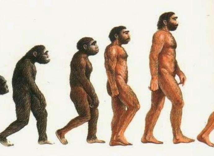 Evoluzione?