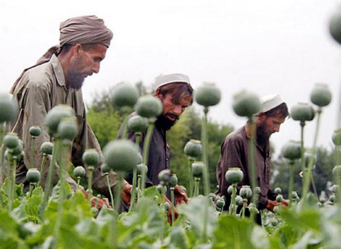 Afghanistan, produzione record di oppio