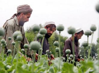 Oppio record, ecco il tesoro dei talebani