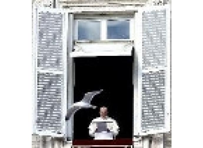 Il Papa all'Angelus