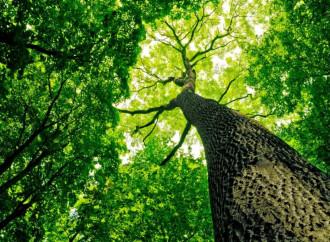 Clima. I 467 effetti negativi del global warming antropico!