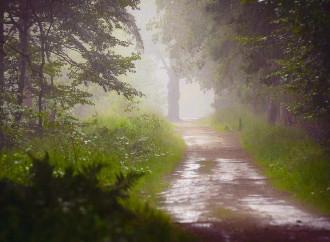 La pioggia nel pineto, l'esperienza sensibile della vita