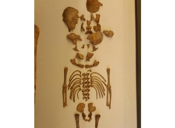 Lo scheletro del piccolo di 8 mesi conservato nel Museo delle Civiltà Preclassiche della Murgia Meridionale