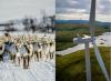 Le renne battono i parchi eolici. E le follie verdi Ue?