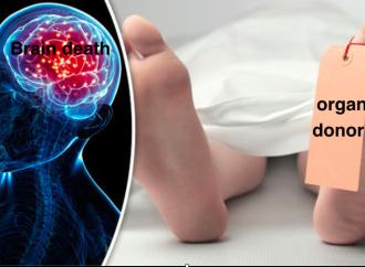 """""""Morte cerebrale una scusa, pensate ai malati come TK"""""""