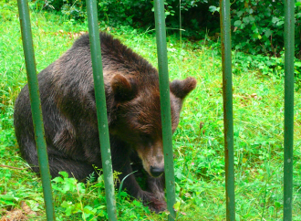 I falsi farmaci cinesi che portano all'estinzione della fauna