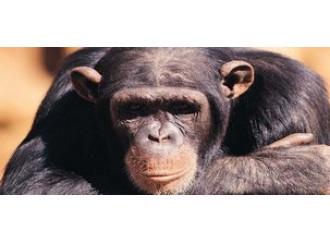 Uomo, altro che scimmia. Dubbi non ve ne sono