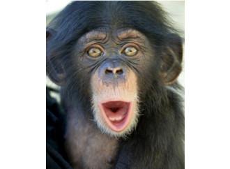 Rischiamo di finire nel Pianeta delle Scimmie